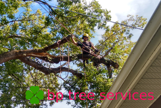bp tree services